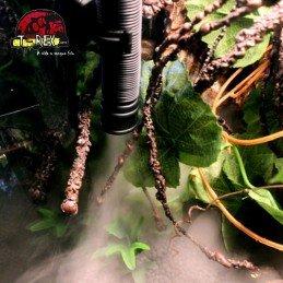 Nebulizador Umidificador para Iguana