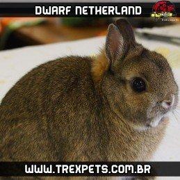 mini coelho neterland brasil