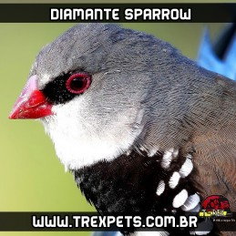 comprar diamante sparrow