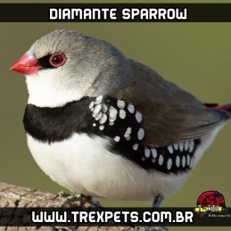 criadouro de diamante sparrow