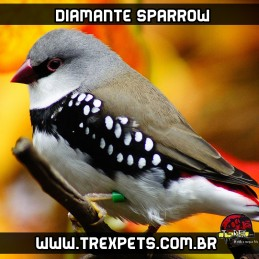 venda diamante sparrow reproducao
