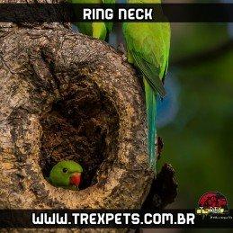 filhote ring neck