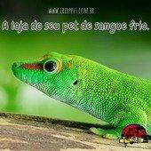 A loja com a maior variedade de produtos para o seu pet de sangue frio. Acesse nosso site www.trexpets.com.br 🦖🦖 #pogona #pogonas #snake #snakes #iguana #iguanas #leopardgecko #leopardgeckos #repteis #répteis #cornsnake #animaisexoticos #terrarios #terrario #kingsnake #crestedgecko #tartarugas #jabuti #tartaruga #tartarugas #turtle #tarantulas #dendrobates #cornsnake #teiú #dragaobarbado #animaisexoticos #lojarepteis #serpentes #reptile #reptiles #trexpets2